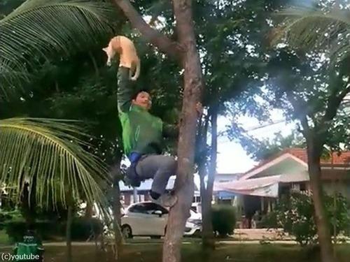 木から降りられない猫03