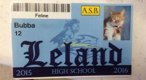 毎日高校に通う猫04