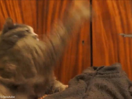 インコが猫にイタズラ05