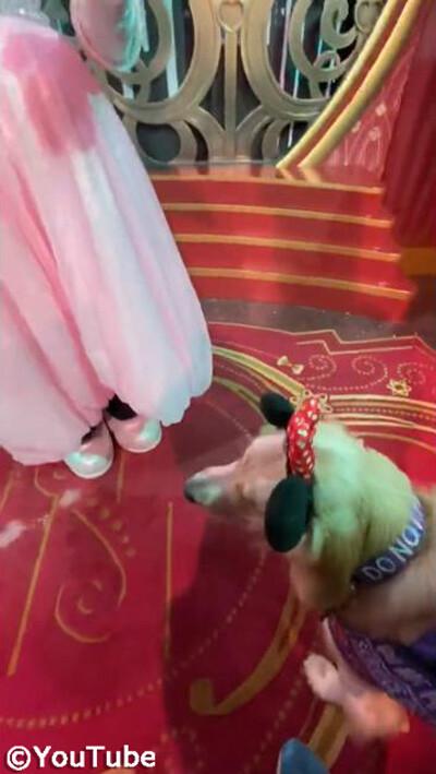 介助犬がミニーにべったり懐く01