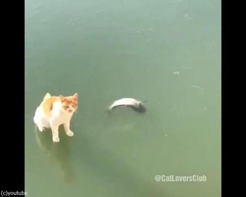 魚とれない猫04