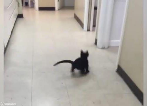 ピンポン猫05