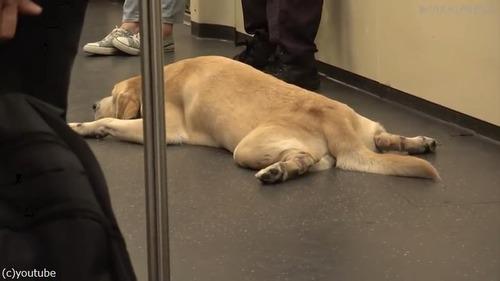 麻薬犬が地下鉄でリラックス05