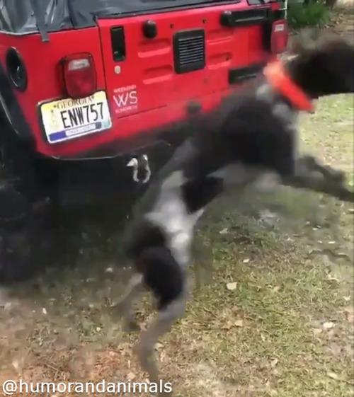 洗車を邪魔する無邪気なワンコ03