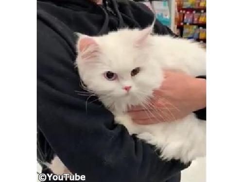 獣医さんを見つけたときの猫の反応00