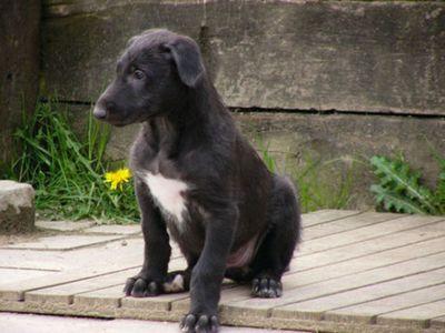 犬の成長07