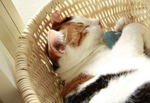 インコと猫03