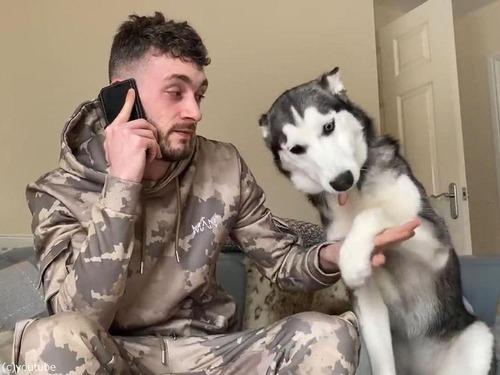 電話に嫉妬する犬05