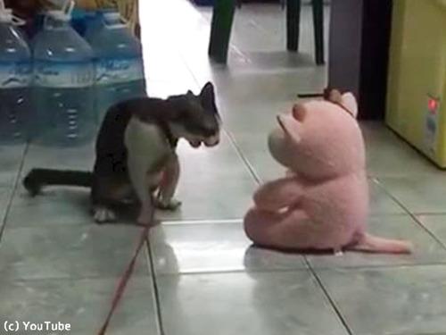 ぬいぐるみに戦いを挑んだ猫…見事なワザを決める(動画)