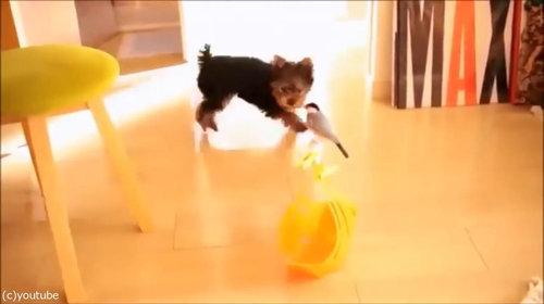 鳥と犬の友情02