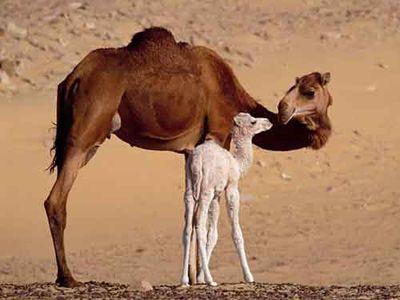 親子愛であふれる動物たち17