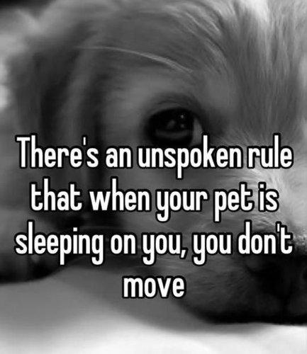 犬の飼い主ならわかること 035
