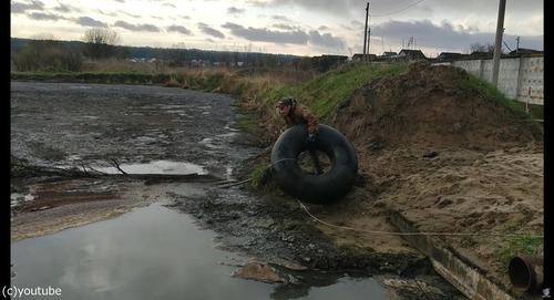 沼地にハマって動けない犬を救出01