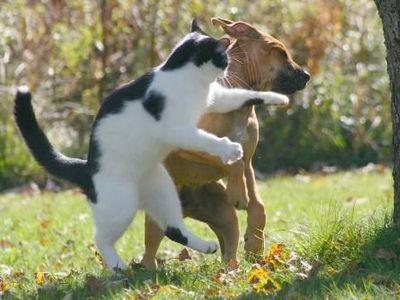 こんな猫はいやだTOP