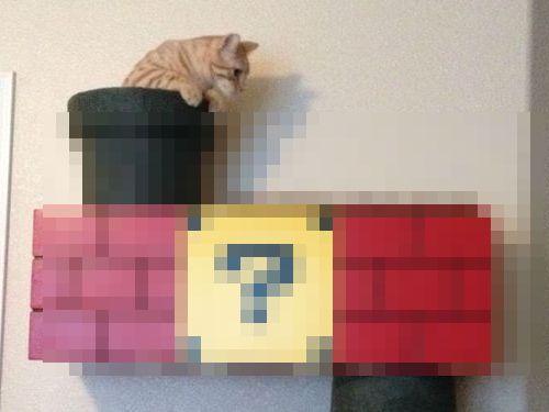 スーパーマリオな猫の遊び場00