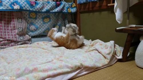 猫に挑むウサギ01