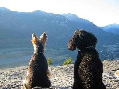 絶景を見下ろす犬06