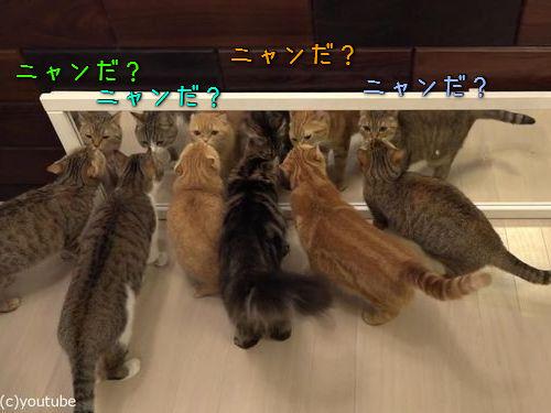 猫10匹と大きな鏡00