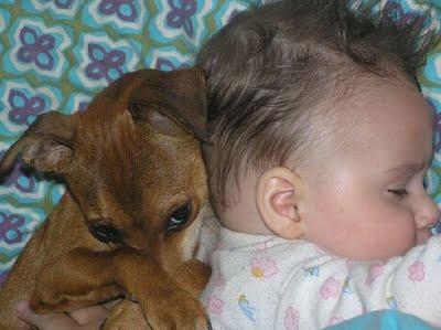 赤ちゃんとペット12