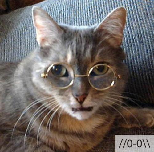 猫の顔文字19