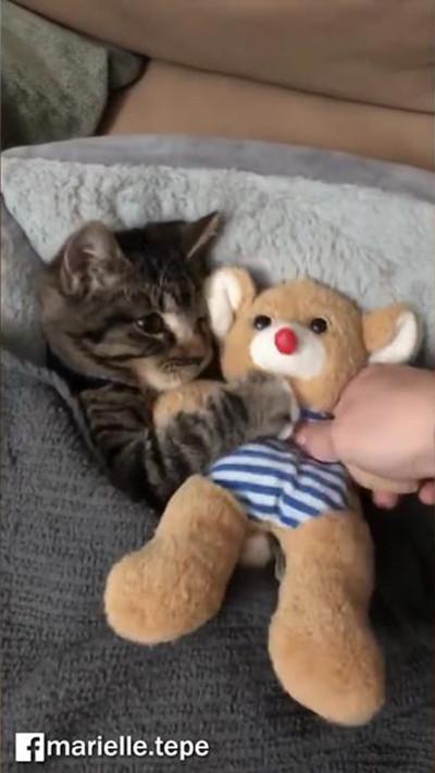 猫のおやすみ動画がかわいすぎ03