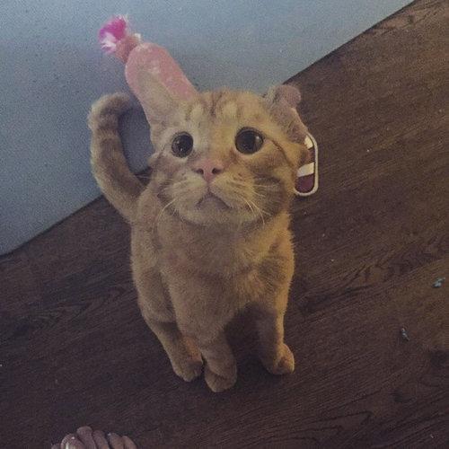ケガをしていた哀しい表情の猫08