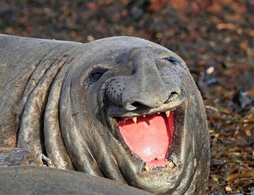 笑っちゃう動物14