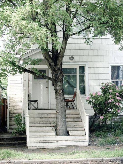 家を建てるために木を切らなかった人々13