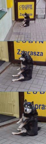 犬にやっとおすわりを覚えさせた02