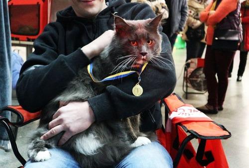 ウクライナのでっかい猫コンテスト02
