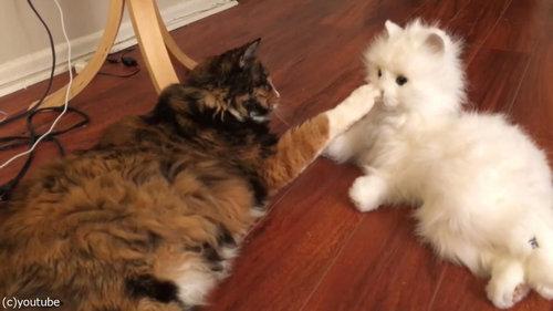 猫型ロボットと初体面した猫たち07