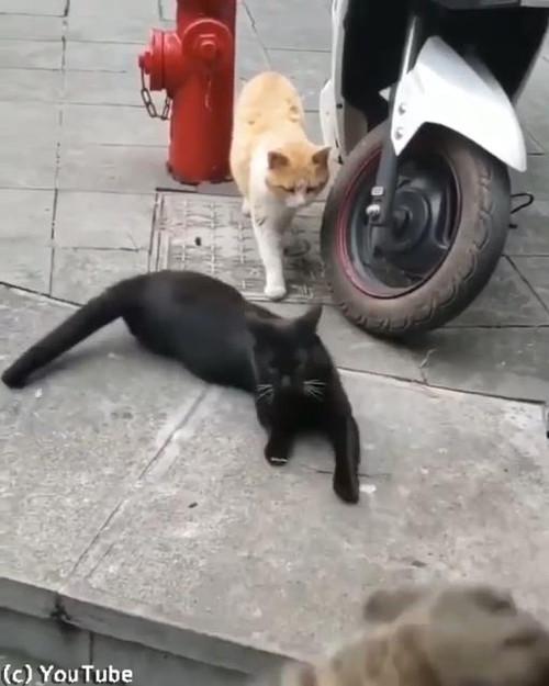 猫の修羅場シーン02