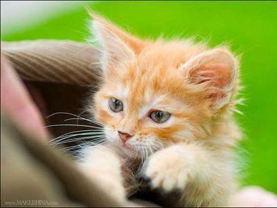 子猫の親友00