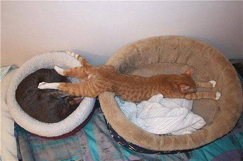 どこでも眠る猫07