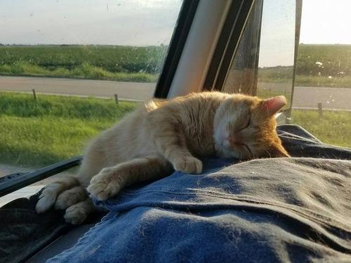 トラック運転手の猫が行方不明も意外な再会05