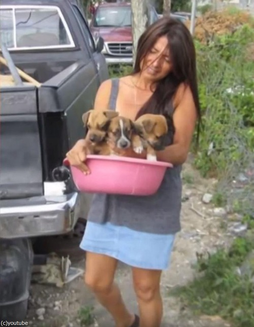 バハマで97匹の犬を保護02