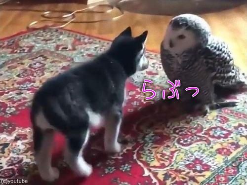 子犬とフクロウの愛情00