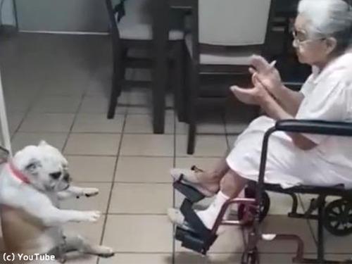 おばあちゃんの歌に合わせてダンスするわんこ00