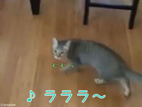 「うちの猫は…私が歌うと飛びついてくる」00