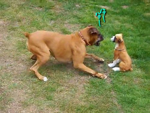 犬のフィギュアに興奮する犬00