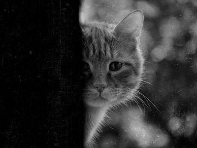猫におびえる