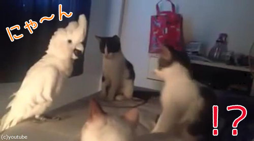 オウム猫00