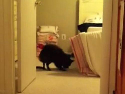 犬とボールと猫01
