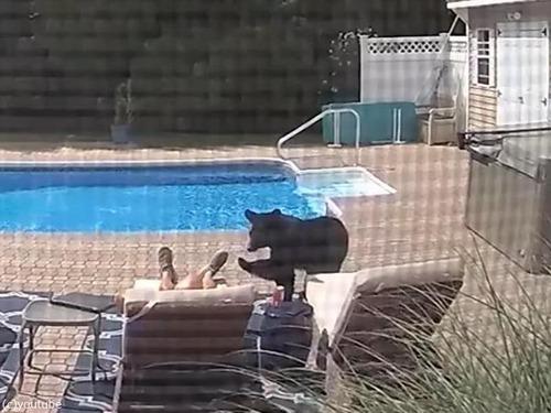 プールサイドで寝てたらクマが足を突っついてきた00
