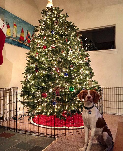 ペットからクリスマスツリーを守る戦い02