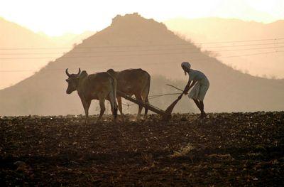 インドの農村