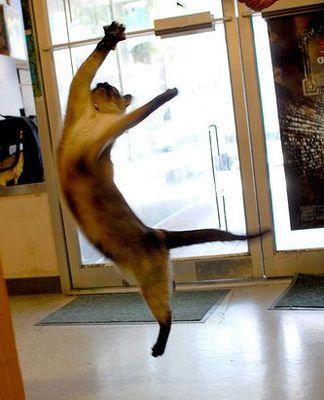 猫ジャンプ03