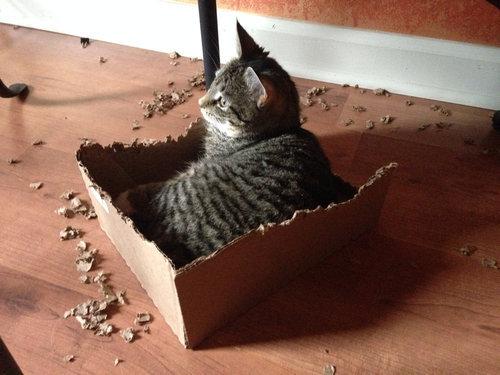 03Box・箱や入れ物に収まる動物たち