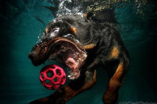 水中の犬11