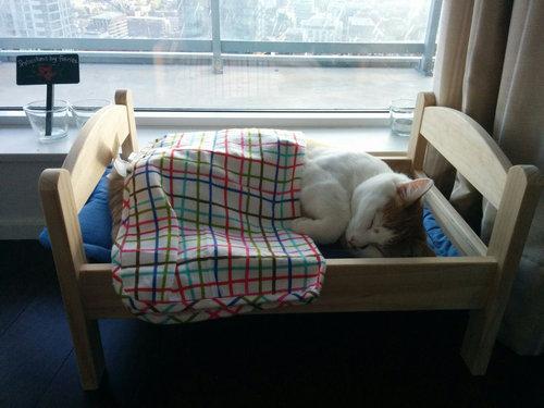 猫ベッド01
